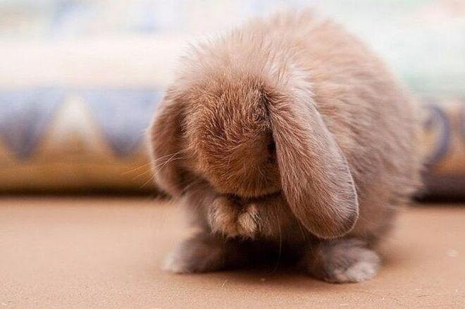 все это картинки грустного зайца светлые сапоги тому