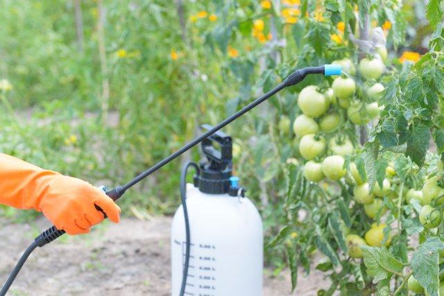 Опрыскивание пестицидами против болезней и вредителей
