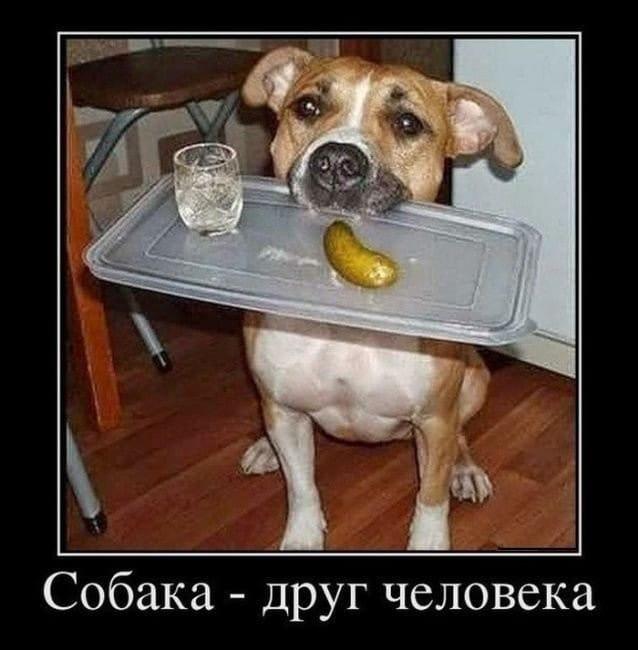обнаружить хочу собаку демотиватор певец красавица-брюнетка