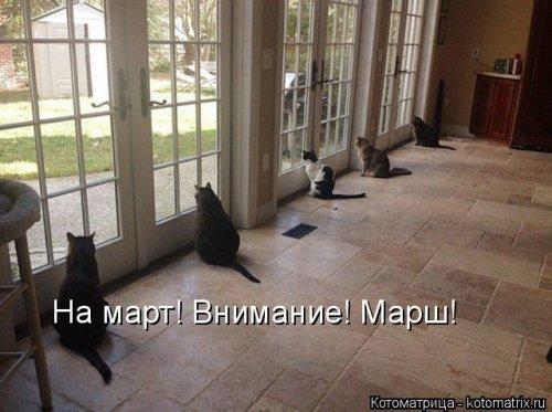 Лучшая котоматрица недели смешные картинки