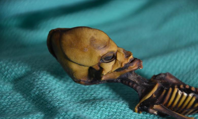"""Ученые опубликовали результаты исследования мумии миниатюрного """"пришельца"""" из пустыни Атакама"""
