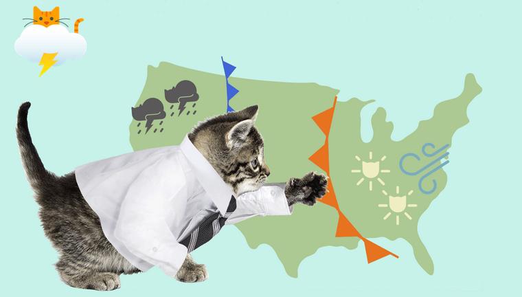 Как коты умеют предсказывать погоду