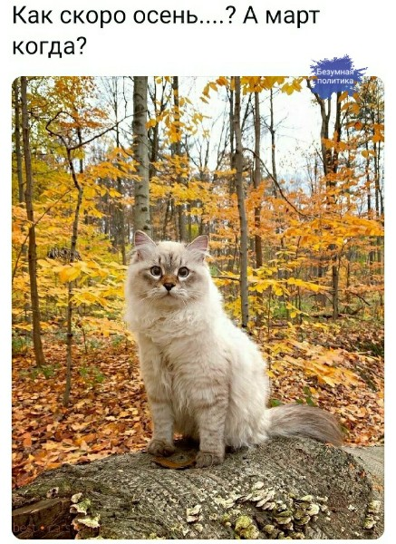 Мой золотой котенок животные,Истории из жизни,отношения,позитив