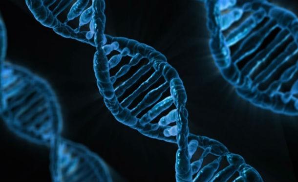 14 любопытных фактов о ДНК любопытное