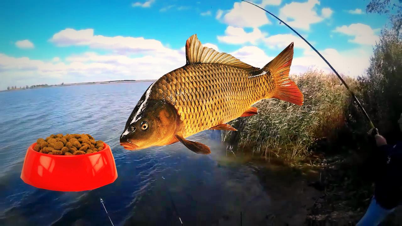 Рыбалка на карпа летом – лучшие снасти, приманки и способы ловли