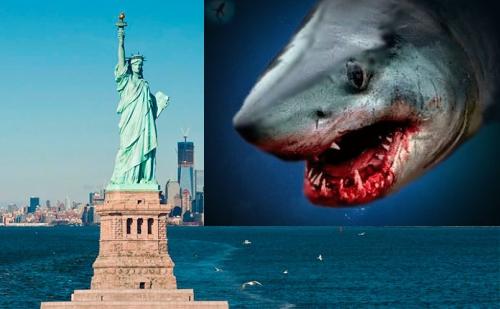 Возле Нью-Йорка собрались акулы. Они чуют еду?