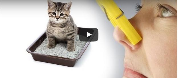 Как БЫСТРО избавиться от ЗАПАХА кошачьей мочи