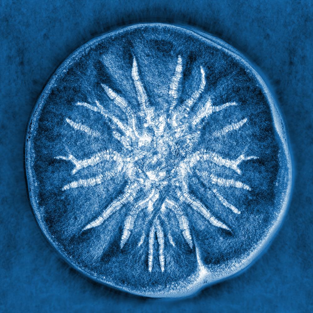 Все ваши попытки защититься от микробов бессмысленны здоровье,исследования,наука