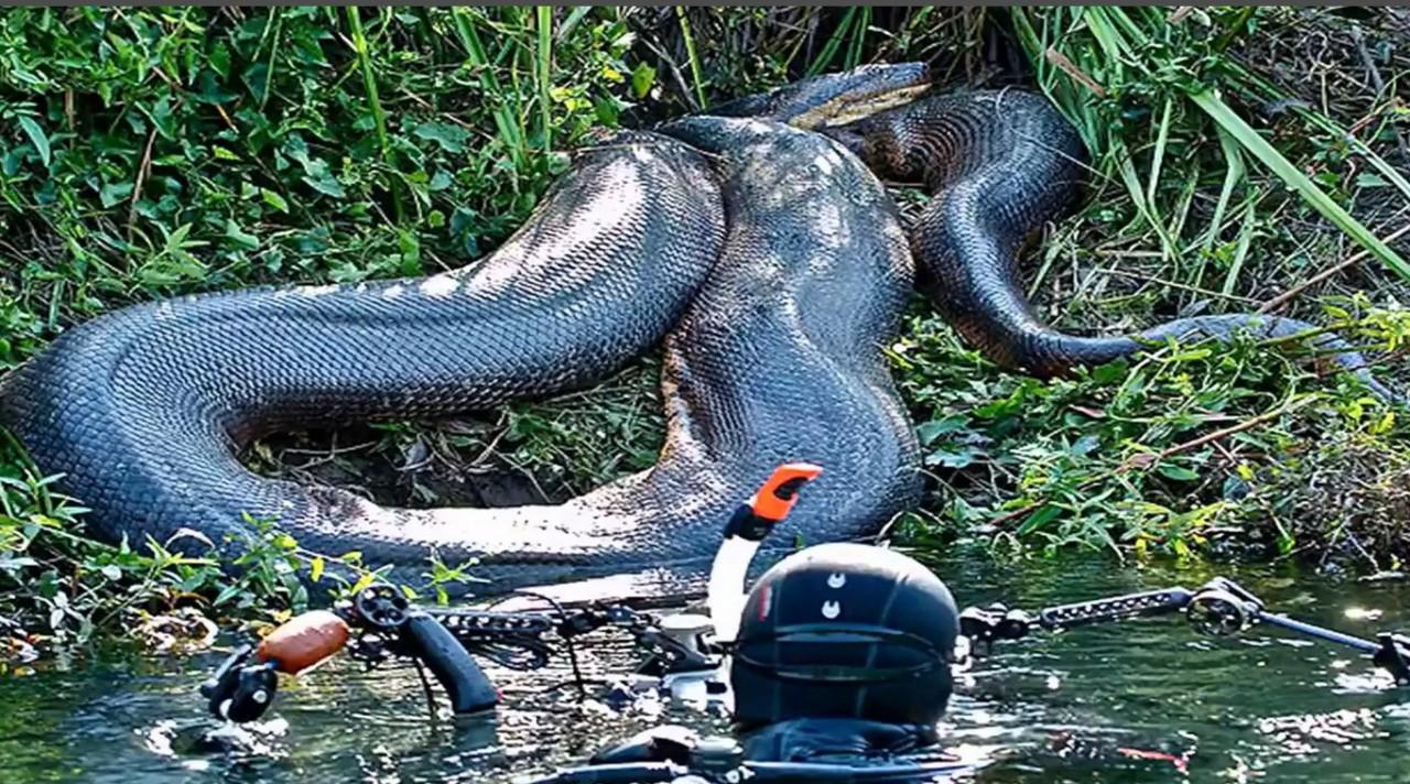 Самая большая змея в мире смотреть картинки