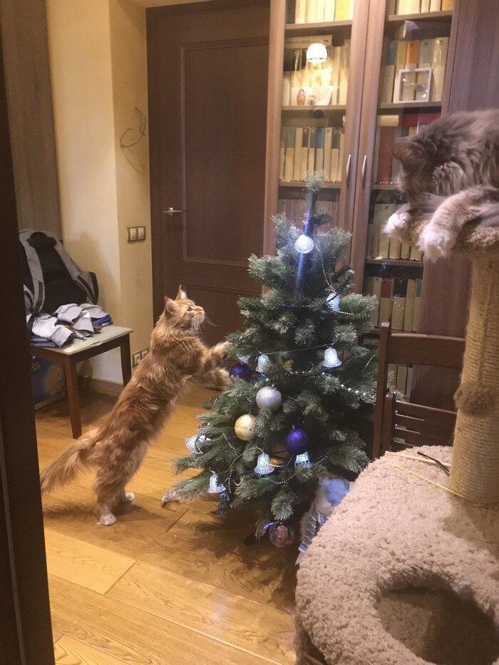 Кому-то спится, а кому-то не сидится елка, игрушки, кот, новый год, разбой