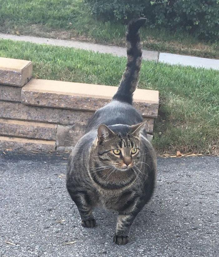 накаченный кот фото тканевой