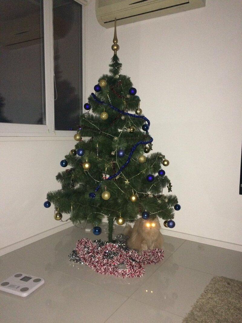 На посту елка, игрушки, кот, новый год, разбой