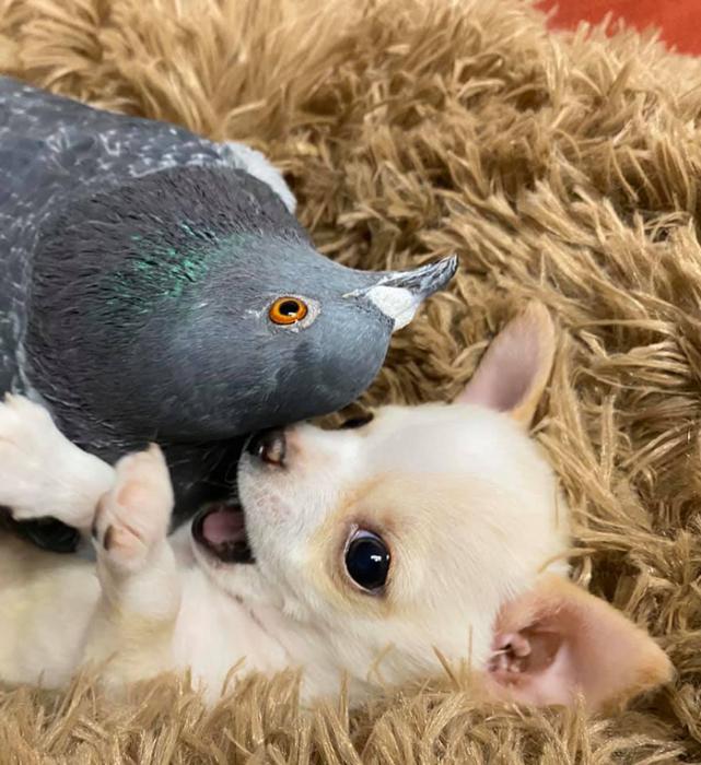 Герман и Ланди теперь лучшие друзья.