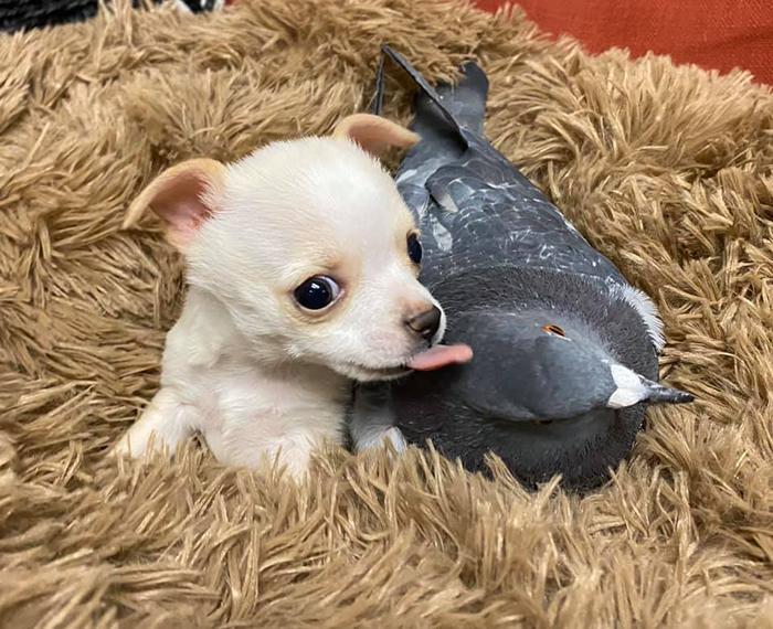 Основатель фонда рада, что у собачки есть такой замечательный друг.