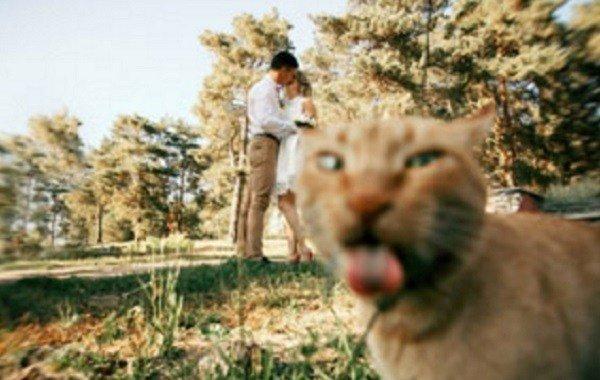 Кошки знают толк в фотографиях