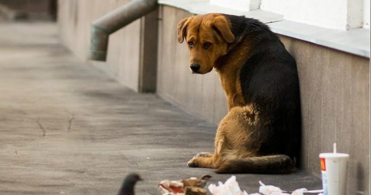 Помощь бездомным животным: 5…