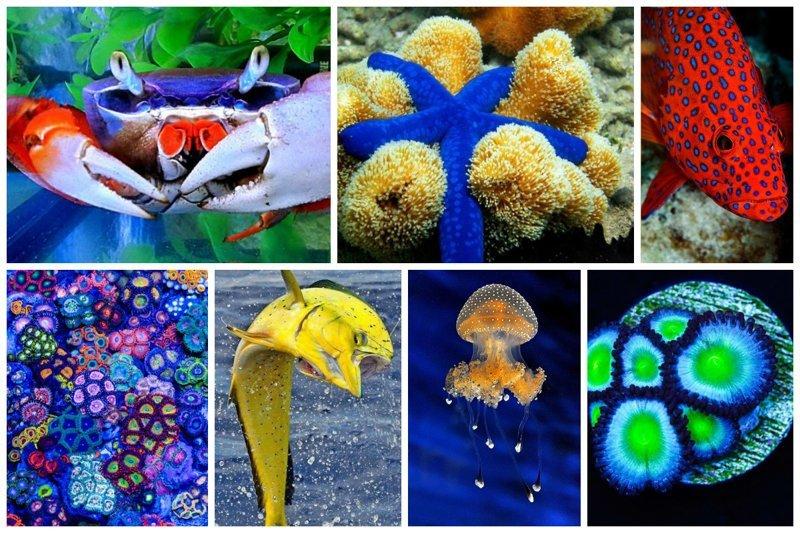Яркость подводного царства