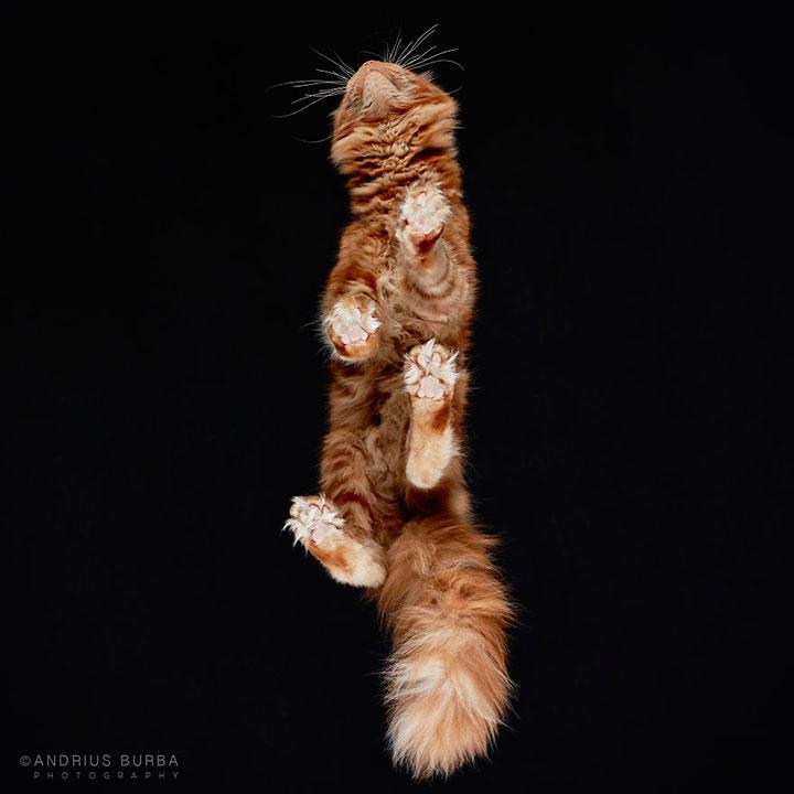 25 фото котов на стеклянном столе, мимо которых просто невозможно пройти картинки,супер