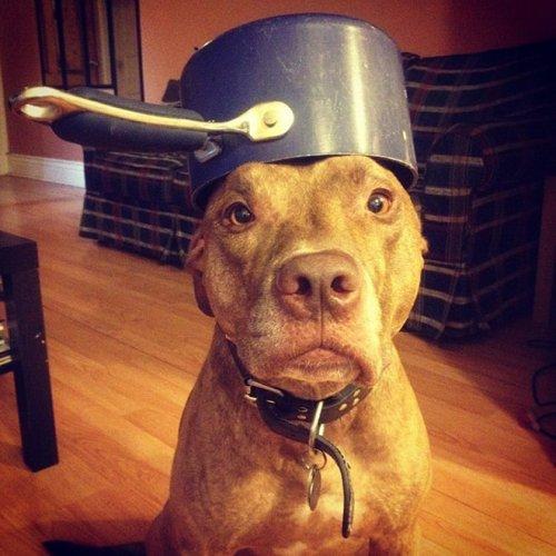 Как выглядит самая терпеливая собака на свете