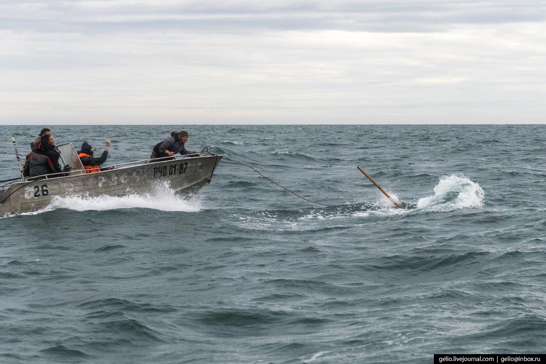Охота на китов запрещена во всем мире, но им можно... киты,охота на китов,путешествия,Россия,фоторепортаж,Чукотка