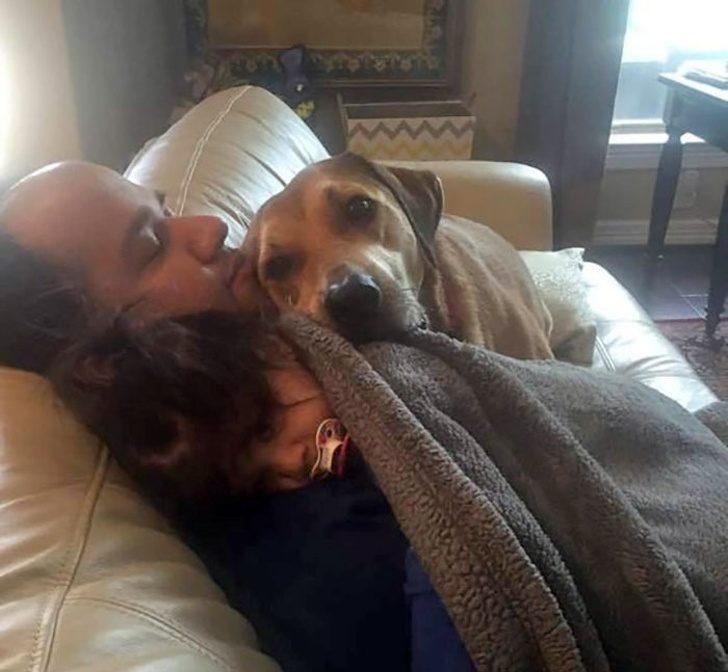 Собачки, которые своей любовью и преданностью покоряют всех вокруг
