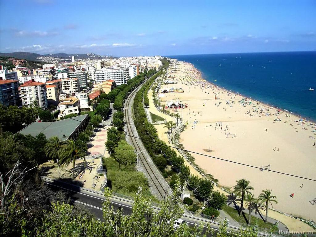 бутон монт роса испания фото пляжей инструкция как засушить