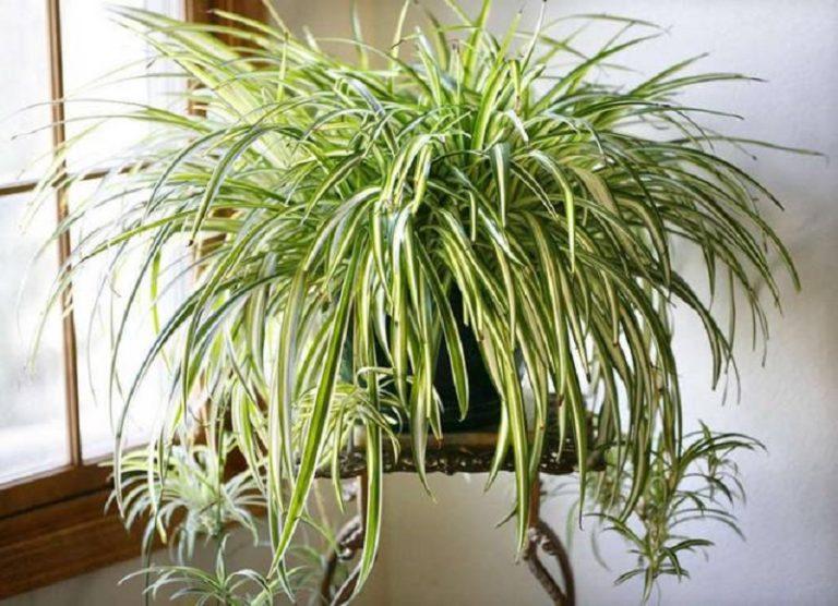 Четыре комнатных растения, к…
