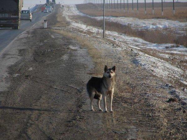Бродячая собака спасла девушку после ДТП
