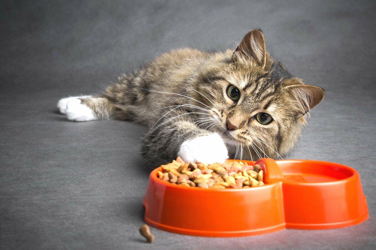 Два пакетика корма для Дуси животные,Истории из жизни,отношения,позитив
