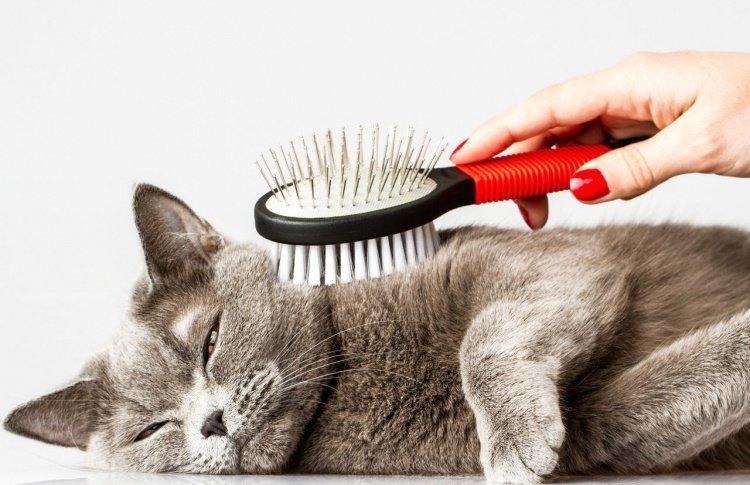 Кошка ест шерсть: что делать…