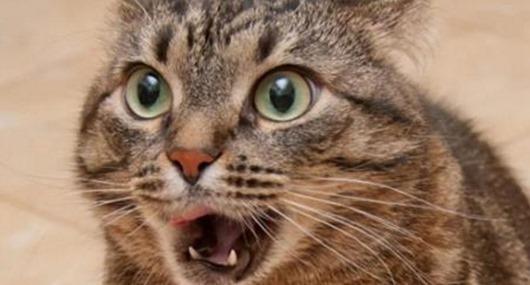 Котик, открой- ка ротик
