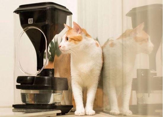 Как собрать умную кормушку для кота