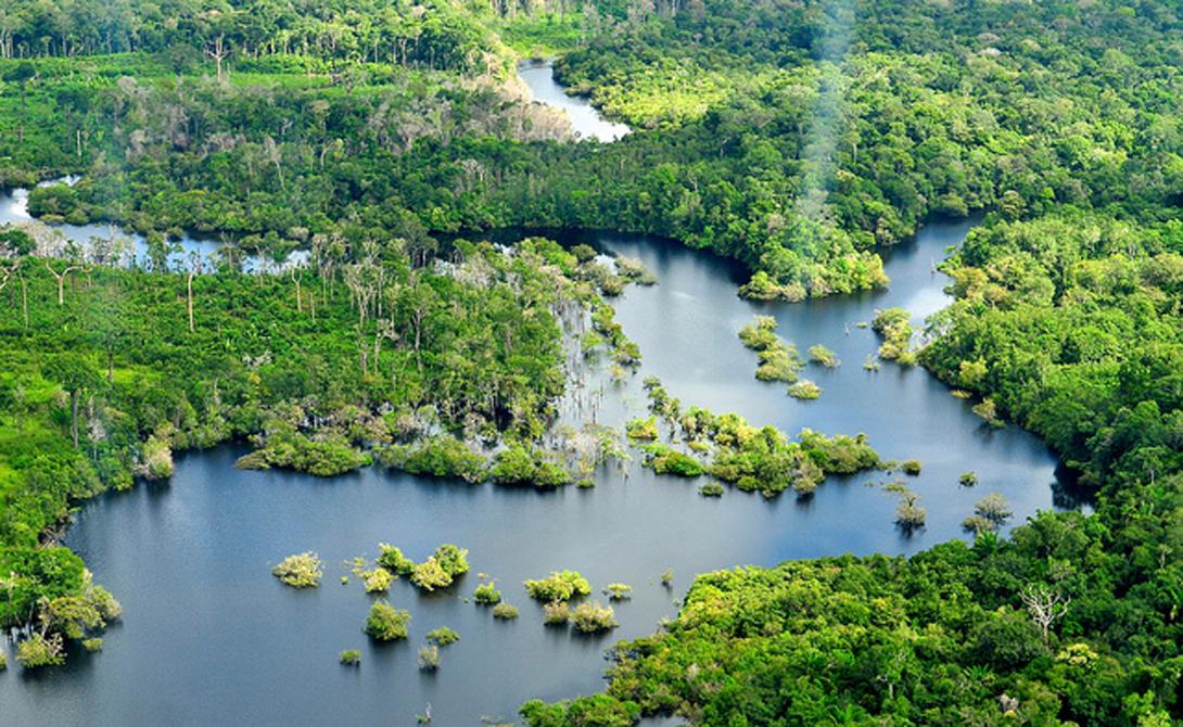 Древнейшие леса мира