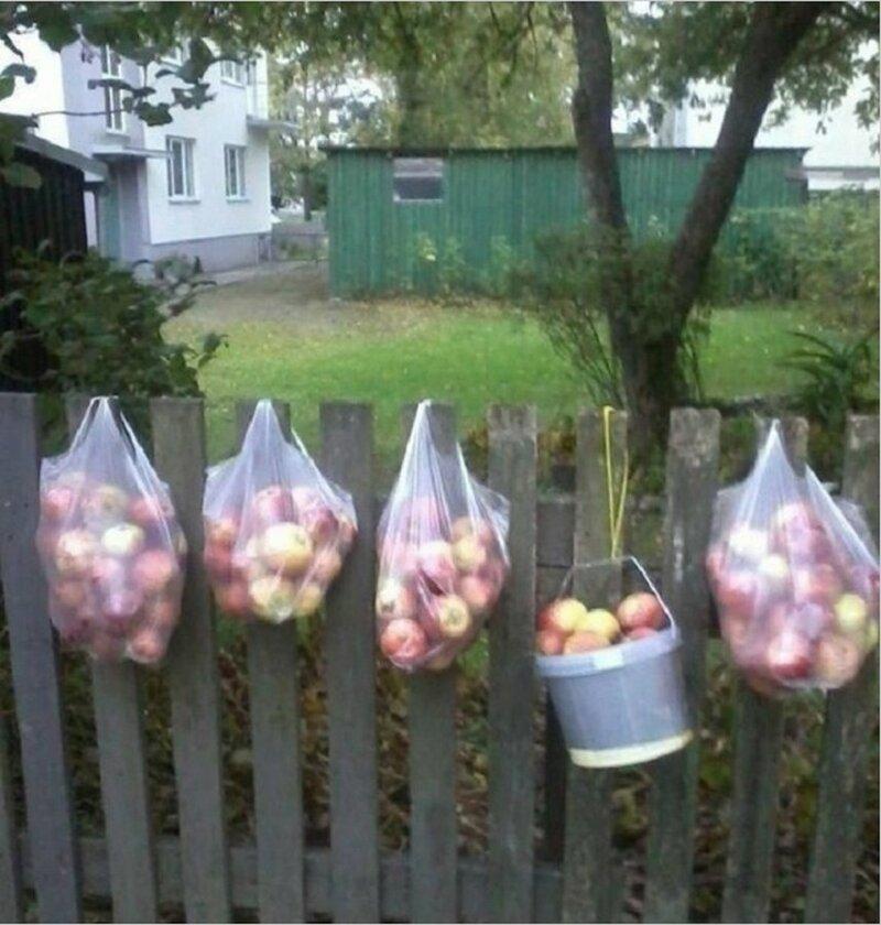 Яблоки для соседей: владельцы частных домов в Эстонии делятся урожаем с жителями многоэтажек добро, доброта, животные, люди, поступок, спасение, человечность
