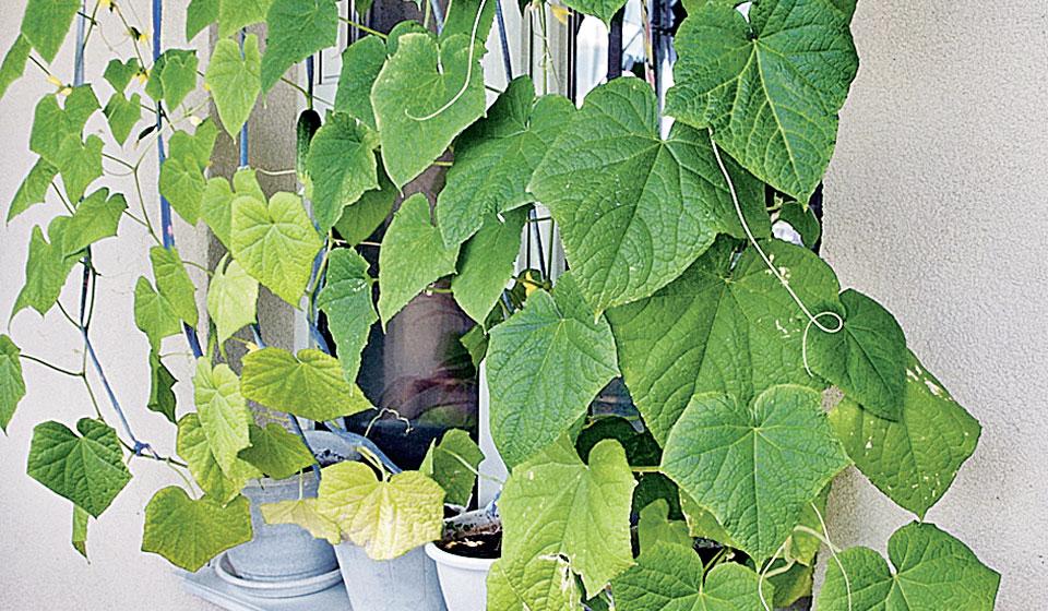 Домашний огород на подоконнике своими руками