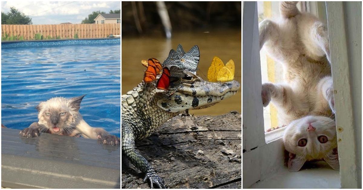 25 лучших фото-доказательств, что животные жутко похожи на людей
