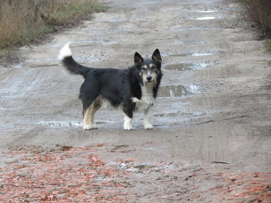 Как вести себя при встрече со стаей бездомных собак