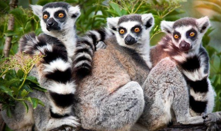 Мадагаскар это остатки древнего погибшего континента?