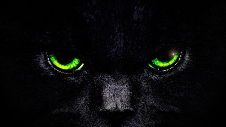 Самые известные кошки. Кто они, как их зовут и где они жили.