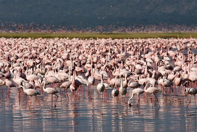 Национальный парк Озеро Накуру, Кения авиатур