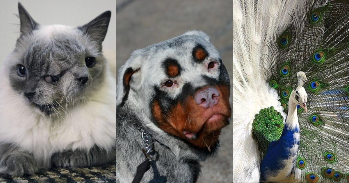 картинки мутации человека и животных киргизии это огромный