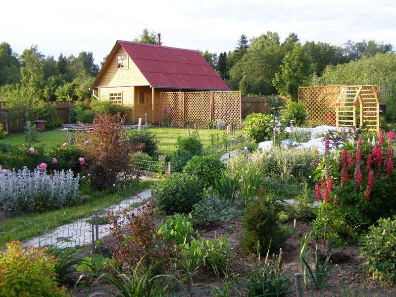 Что посадить полезного на даче, не требующего особого ухода?