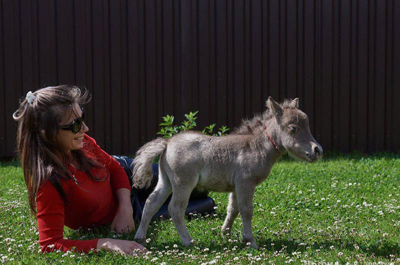 В это невозможно поверить: на свет появился самый маленький конь