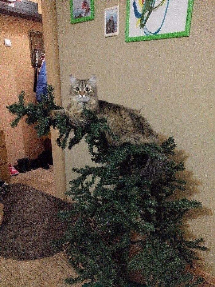 заботит смешные картинки про котов и елку большой удачи, надёжного