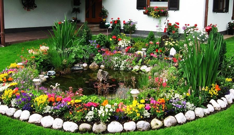 Вьющиеся домашние цветы фото с названиями кардиганы стиле