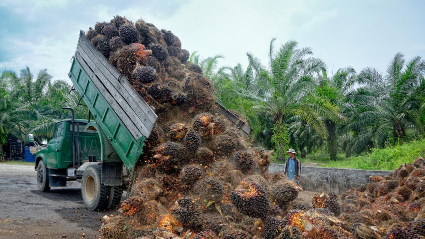 Слово в защиту пальмового масла