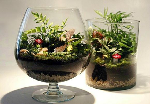 флорариум в бокале и стакане