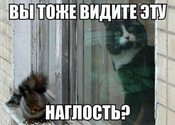 Про  котов и медицину. 18+