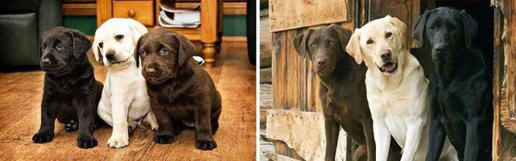 собаки тогда и сейчас, собаки выросли, щенки превратившиеся в больших собак