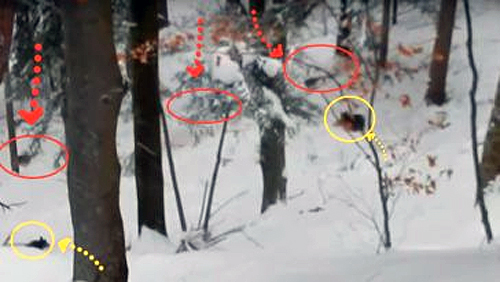 Маму-медведицу и ее медвежат окружила стая волков в лесу. К счастью, рядом оказался он
